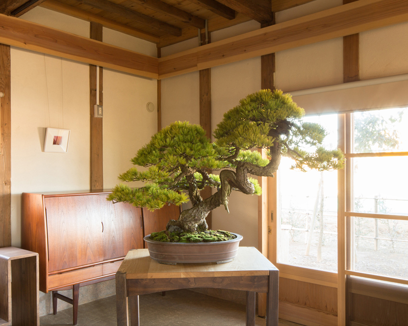 BONSAI MORI